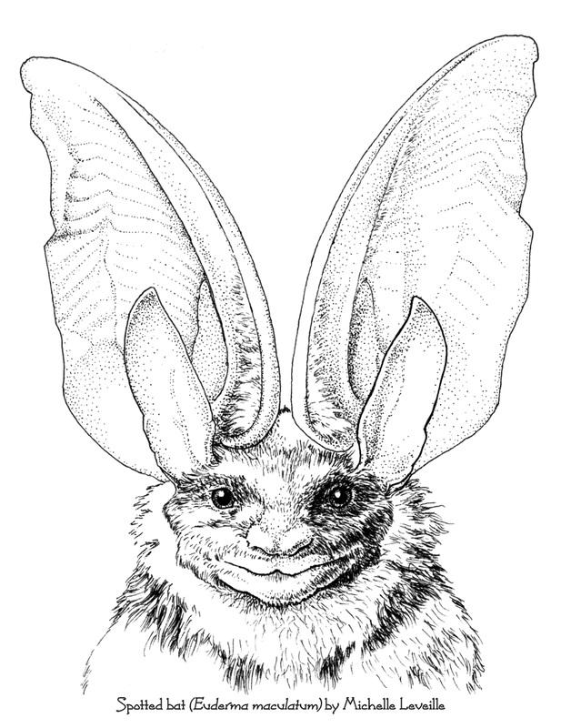 Artifact Graphics - Animal Illustrations - Artifact Graphics